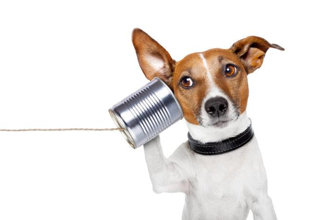 Koira pitää tassullaan peltitölkkipuhelinta